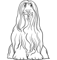 bearded collie dog cartoon for coloring vector image