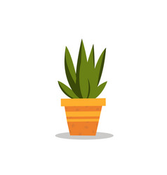 flat little aloe vera in pot with isolated white vector image