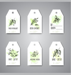 Herbs and spices hanging tags herb plant spice vector