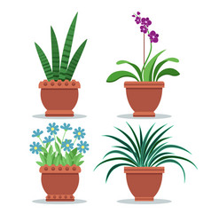 sansevieria room plant set vector image