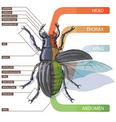 Study guide for entomologists vector