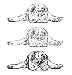 Drawing of lying bullmastiff vector image