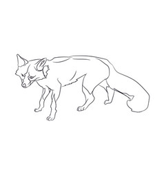 fox stands lines vector image