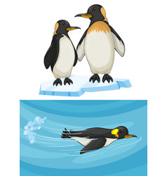 Penguin swimming and standing on ice vector