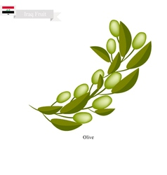 Ripe olive a popular fruit in iraq vector