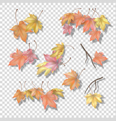 set of maple autumn leaves vector image