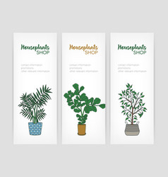 Set of vertical banner templates with fiddle leaf vector