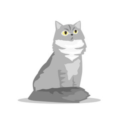 fluffy siberian cat with gray fur pet with vector image