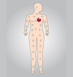 The function of the cardiovascular system vector image