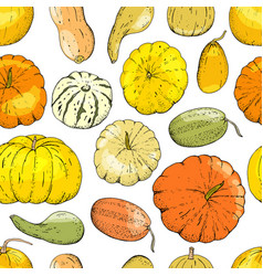 seamless pattern pumpkin isolate on white vector image