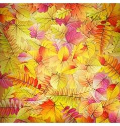 Colorful fallen autumn leaves eps 10 vector