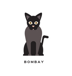 Elegant bombay cat type of short-haired feline vector