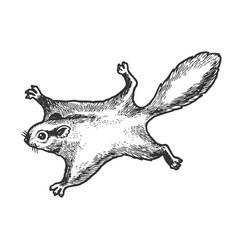 Flying squirrel animal sketch engraving vector