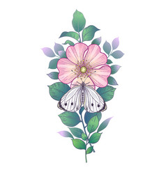 hand drawn pink dog-rose flower and butterfly vector image