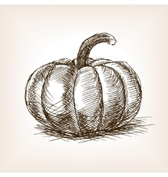 Pumpkin hand drawn sketch style vector