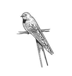 Swallow bird sketch vector