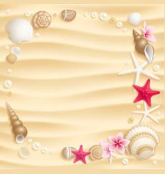 seashell background vector image