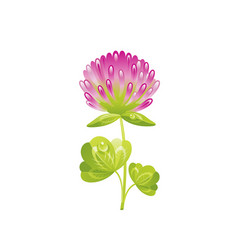 Clover shamrock flower floral icon realistic vector