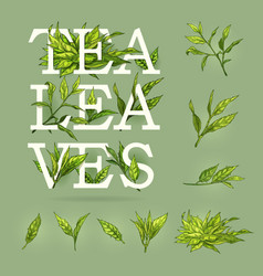 Colourful banner of tea with leaves elements and vector