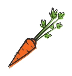 Organic carrot isolated popart vector