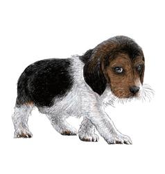 Puppy beagles 01 vector image