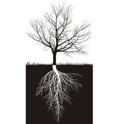 Cherry tree without leaves with roots vector