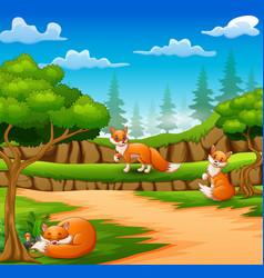 Happy three fox cartoon on nature scene vector