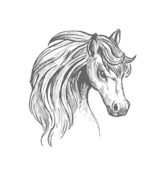 Head of a horse with wavy mane sketch symbol vector image