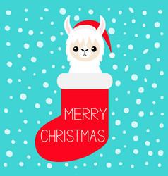Merry christmas llama alpaca baface in red vector