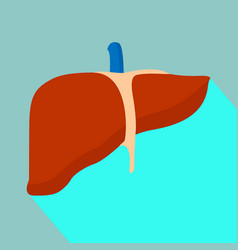 liver with shadow vector image