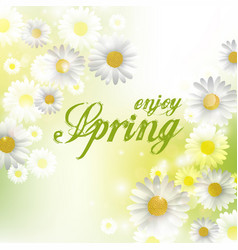 spring beautiful background with flowers daisies vector image vector image