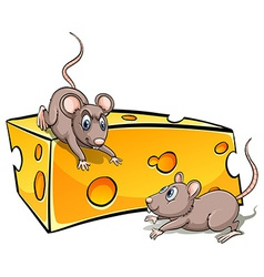 Slice of cheese with rats vector image