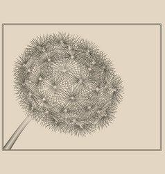 blowball woodcut vector image
