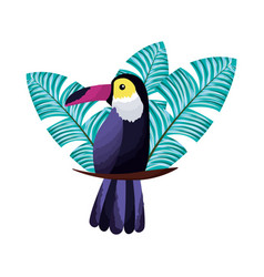 exotic toucan bird leaves tropical vector image