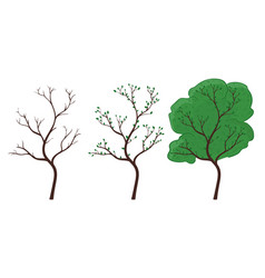 Tree in season changing hand drawn colored doodle vector
