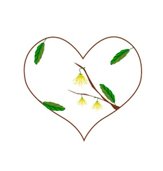 Yellow ylang ylang flowers in a heart shape vector