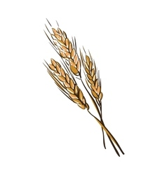 doodle wheat spikelets vector image