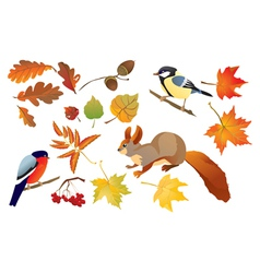 Set of isolated autumn forest leafs vector image