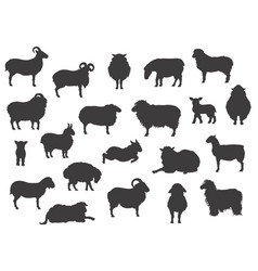 Sheep breeds black silhouettes collection farm vector