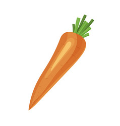 orange carrot isolated on white background vector image vector image