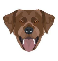 chocolate-colored labrador retriever with smile vector image