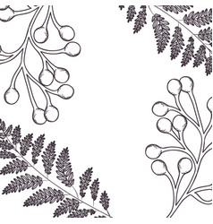 Pattern plants and herbs isolated icon vector