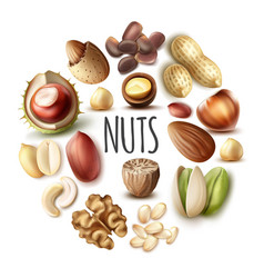 Realistic nuts round concept vector