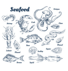 Seafood poster and species vector