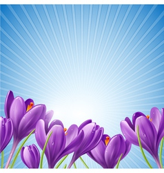 Spring flowers on a blue background vector
