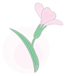 tender flower vector image vector image
