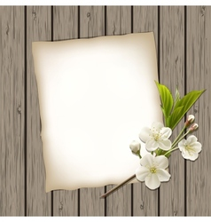 Blank paper with blossoming cherry branch vector image
