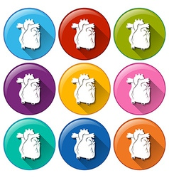 Buttons with heart organs vector image