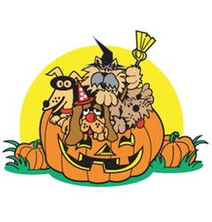 Dogs in a pumpkin vector image