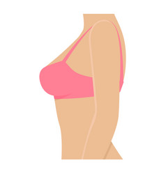 Female breasts in bra vector